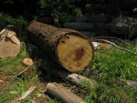 Holzsägen